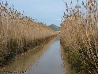Flooded road, S'Albufera Natural Area - Mallorca, Spain