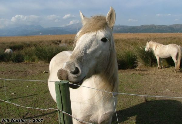 horse eating apple gif impremedianet